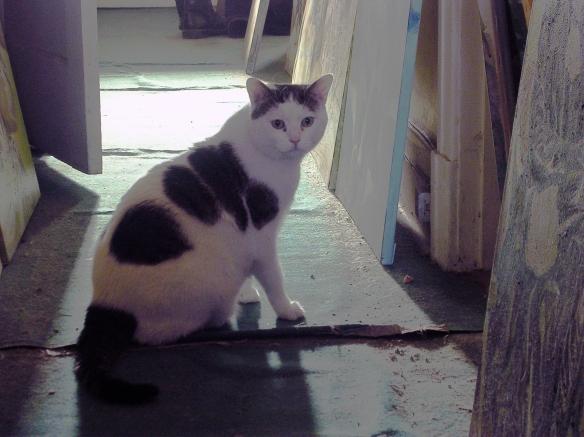 Mon chat 008-R