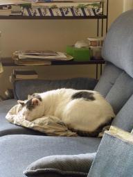 Mon chat 011-R