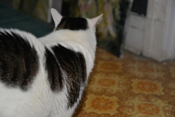 Mon chat 013-R