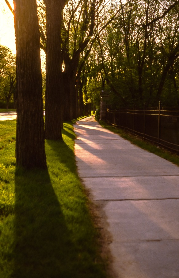 Trees, Winnipeg, June 1982